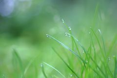Grass after rain Royalty Free Stock Image