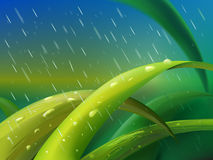 Grass in rain. Tuft of green grass between falling raindrops Stock Images