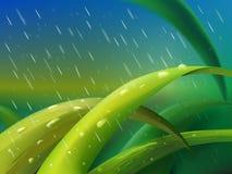Grass in rain. Tuft of green grass between falling raindrops stock illustration