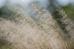 Grass after rain Royalty Free Stock Photography