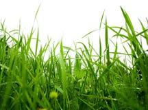 Grass after rain Royalty Free Stock Photos