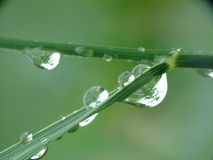 Grass and rain drops. Macro Royalty Free Stock Photography