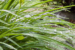 Grass after rain Stock Image