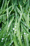 Grass after rain Stock Images