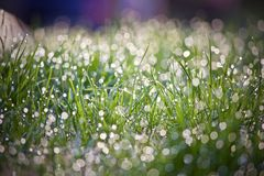 Grass with Rain Drops Stock Photo