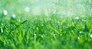 Grass with rain drops. Watering lawn. Fresh green spring grass with dew drops closeup. Soft focus. Abstract nature spring background stock images