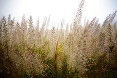 Grass. Rain fog of grass is the tears of the forest Royalty Free Stock Image
