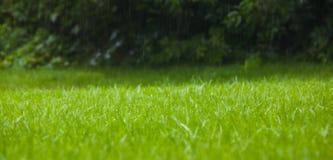 Grass in the rain Stock Photo