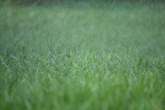 Grass, rain and water droplets Royalty Free Stock Photography