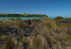 Grass on Rangitoto island Royalty Free Stock Image