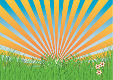Grass with rays Royalty Free Stock Photos