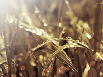 Grass and rays Royalty Free Stock Photo