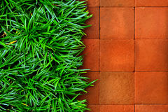 Grass and red brick Stock Photos