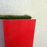 Grass in red flowerpot Stock Photos