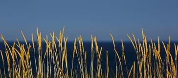 Grass Reeds Beach Blue Sky Stock Image
