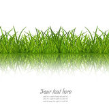 Grass and reflect Royalty Free Stock Images