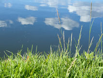 Grass and reflected clouds Royalty Free Stock Image