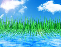Grass reflected in water Royalty Free Stock Photography