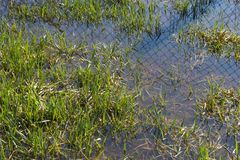 Grass reflected in water and sky Stock Image