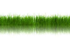 Grass with reflection Royalty Free Stock Images