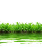 Grass reflection Royalty Free Stock Images