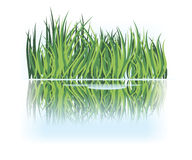 Grass reflection in calm water Royalty Free Stock Image
