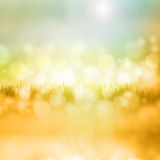 Grass with reflection Stock Photography