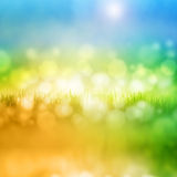 Grass with reflection Royalty Free Stock Photo