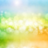 Grass with reflection Royalty Free Stock Photography