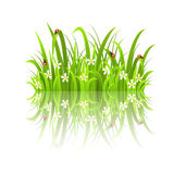 Grass and reflection Stock Photo