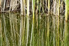 Grass  with reflection in water Royalty Free Stock Images