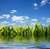 Grass and reflection in water. Green sunny field under blue sky Royalty Free Stock Images