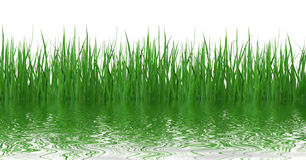 Grass reflection in water Royalty Free Stock Image