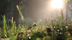 Grass right after a morning rain stock video footage