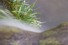Grass by river. A tuft of green grass growing next to a flowing river Stock Photography