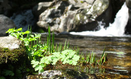Grass in the river Stock Photography