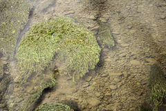 Grass in river Stock Images