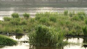 Grass and river view stock footage