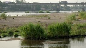 Grass and river view stock video footage