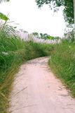 Grass and road Stock Images