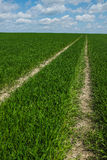 Grass road to nowhere Royalty Free Stock Images