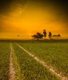Grass road to the sun Stock Images