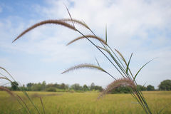 Grass at the roadside Stock Photo