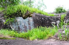 Grass view on stone in Phu Hin Rong Kla. Grass in rock breaking Phu Hin Rong Kla Phitsanulok Royalty Free Stock Image