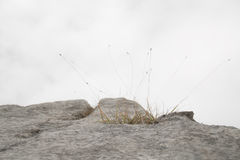 Grass on a rock Royalty Free Stock Photography