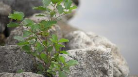 Grass on the rocks stock footage