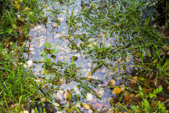 Grass among the rocks in water Royalty Free Stock Photos