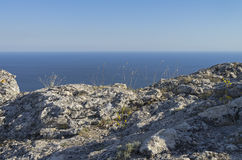 Grass on a rocky cliff on the background of the sea. Crimea. Stock Photo