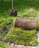 The grass in roll for laying on the lawn for landscaping. Stock Photography