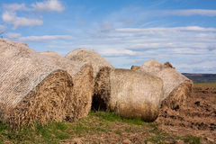 Grass roll. Grass for sheep in summer Royalty Free Stock Photo